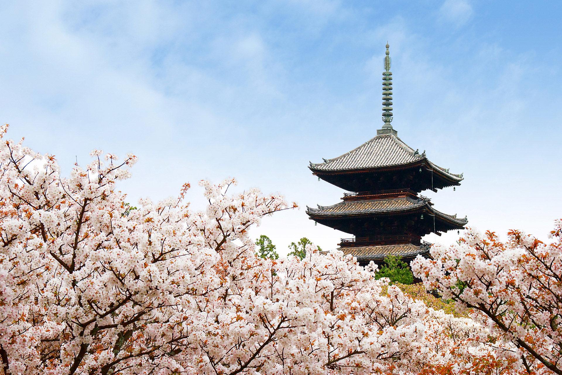 京都-仁和寺-桜-イメージ