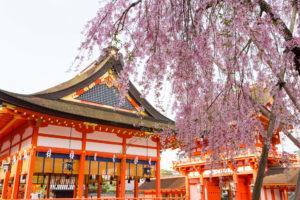 京都-伏見稲荷-桜