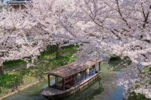 京都-十石舟-桜