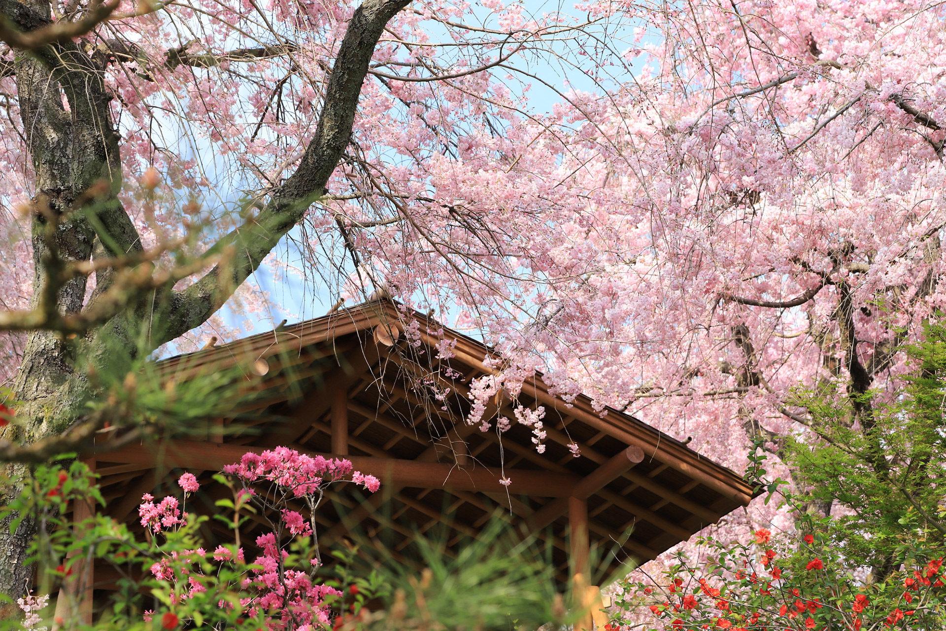 京都-原谷苑-中-イメージ