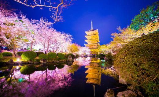 京都-夜桜-イメージ