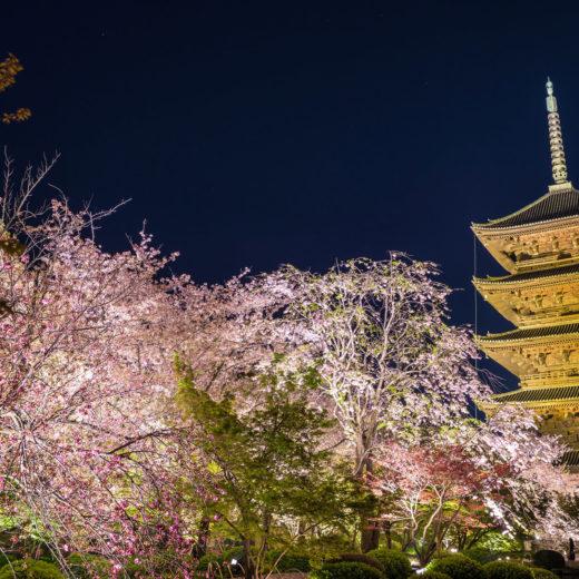 京都-夜桜-スポット