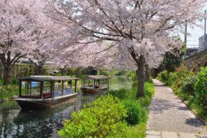 京都-宇治川-桜-イメージ