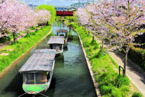 京都-宇治川-桜-舟