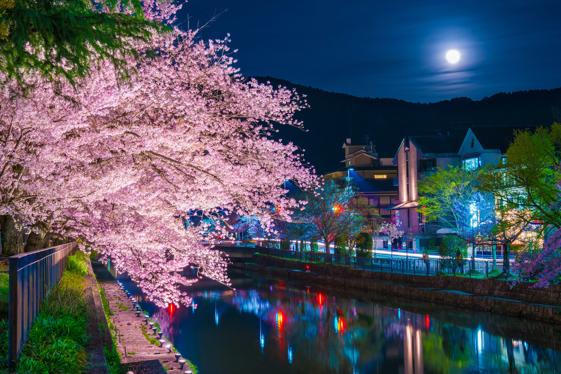 京都-岡崎疎水-桜-ライトアップ