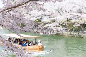 京都-岡崎疎水-桜-舟