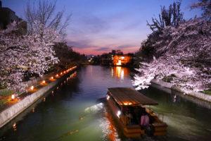 京都-岡崎疎水-桜