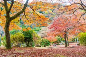 京都-嵐山公園-紅葉