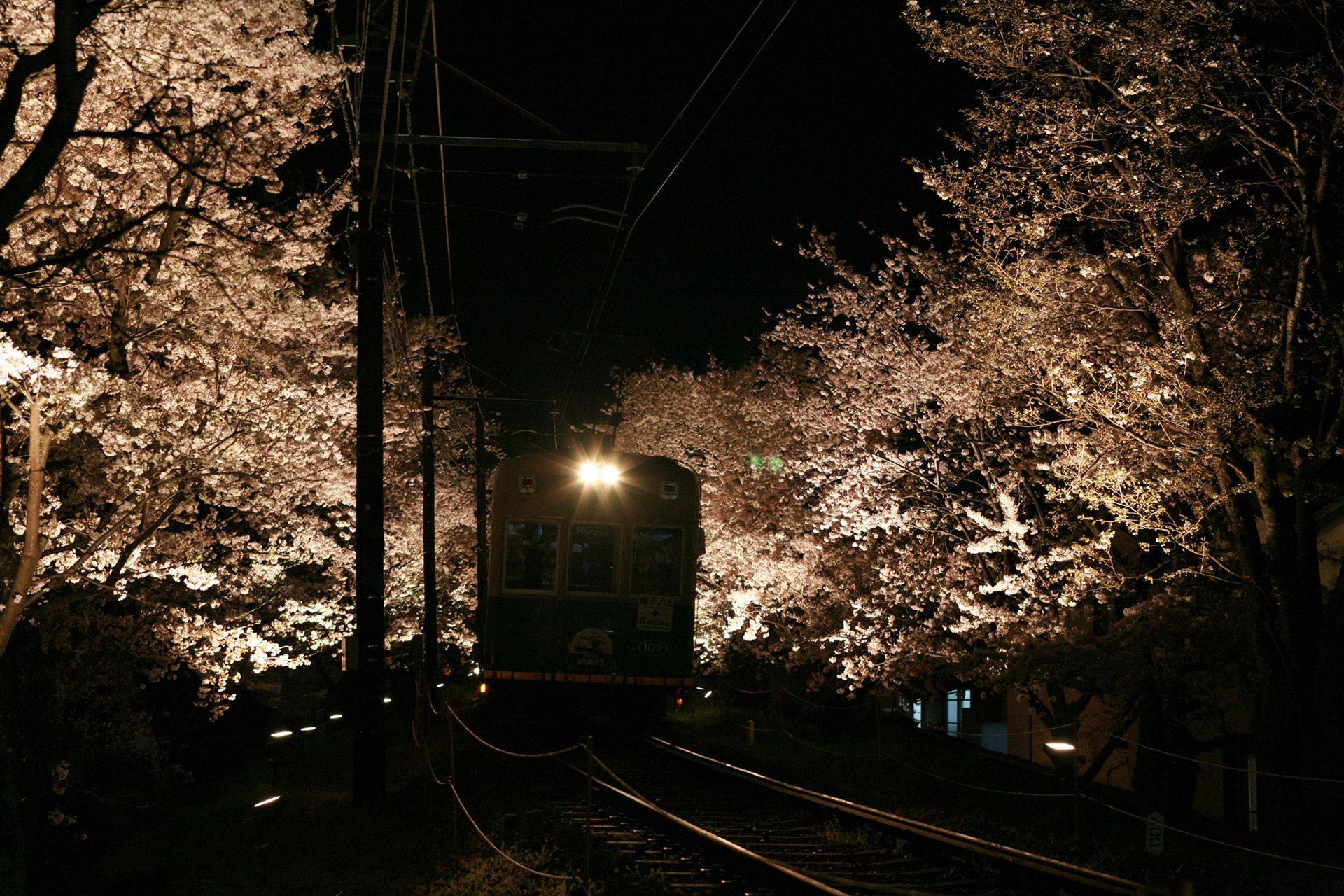 京都-嵐山-ライトアップ
