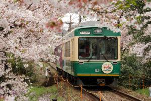 京都-嵐山-桜のトンネル