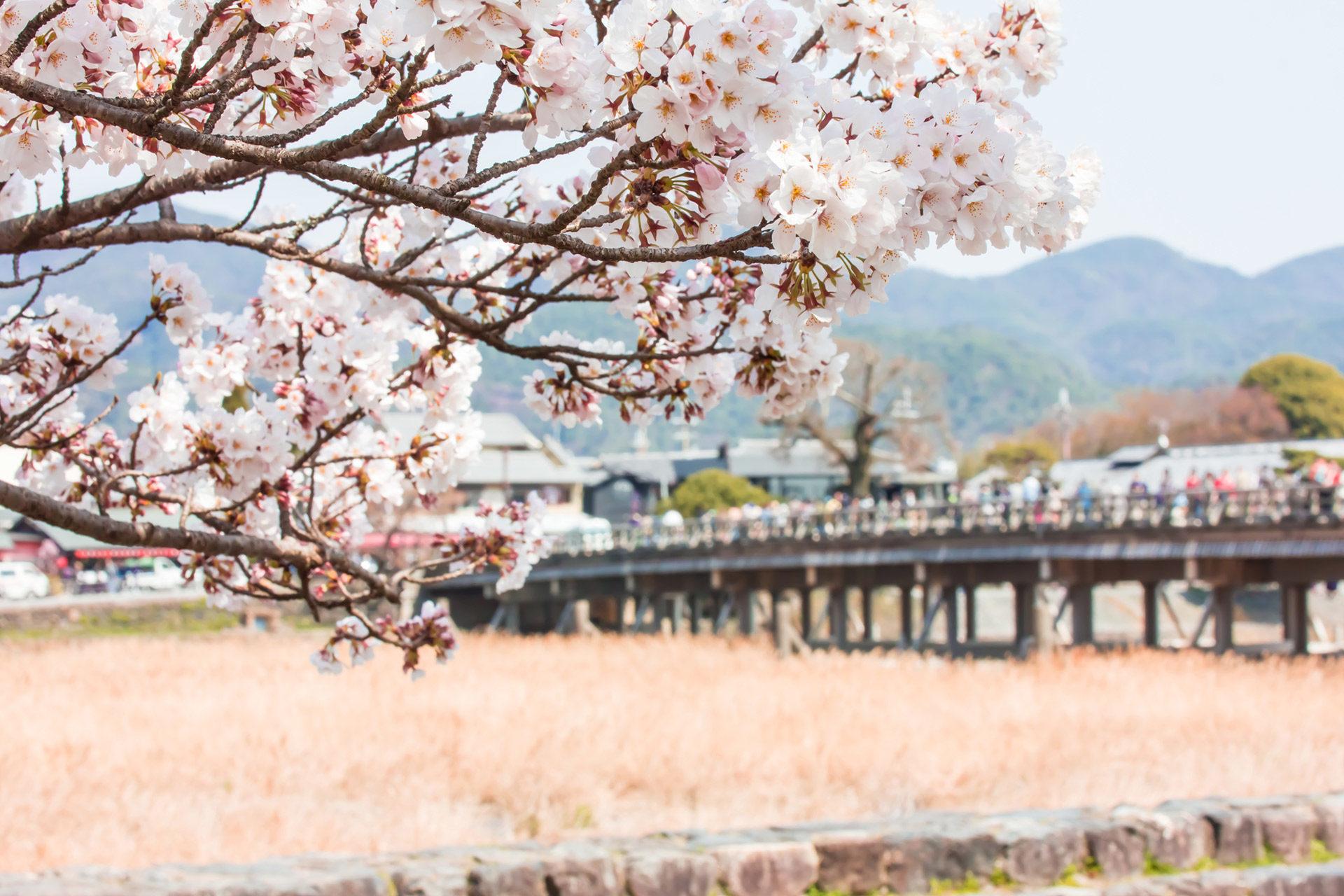 京都-嵐山-桜-イメージ