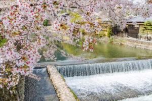 京都-嵐山-桜-舟