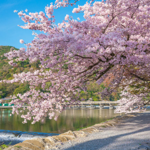 京都-嵐山-桜