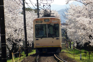 京都-嵐電-桜