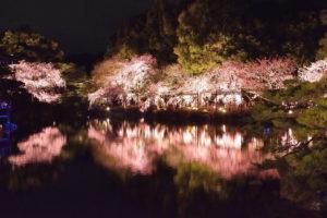 京都-平安神宮-桜-ライトアップ