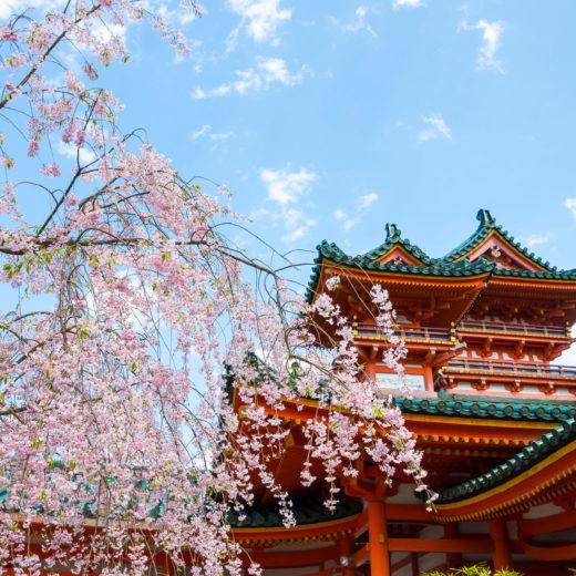 京都-平安神宮-桜