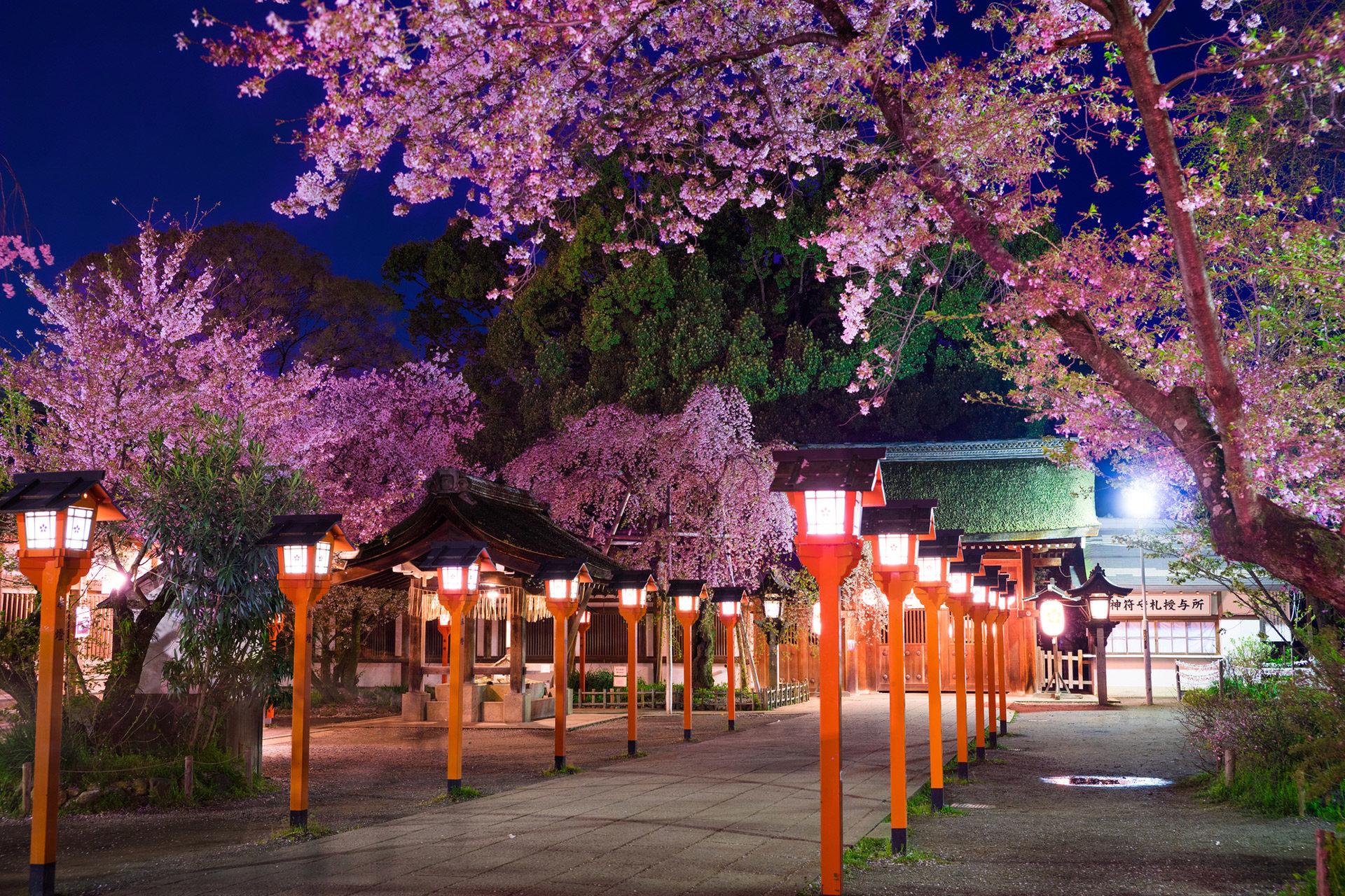 京都-平野神社-夜桜