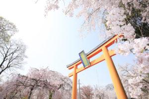 京都-平野神社-桜-イメージ-風景