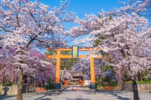 京都-平野神社-桜-イメージ
