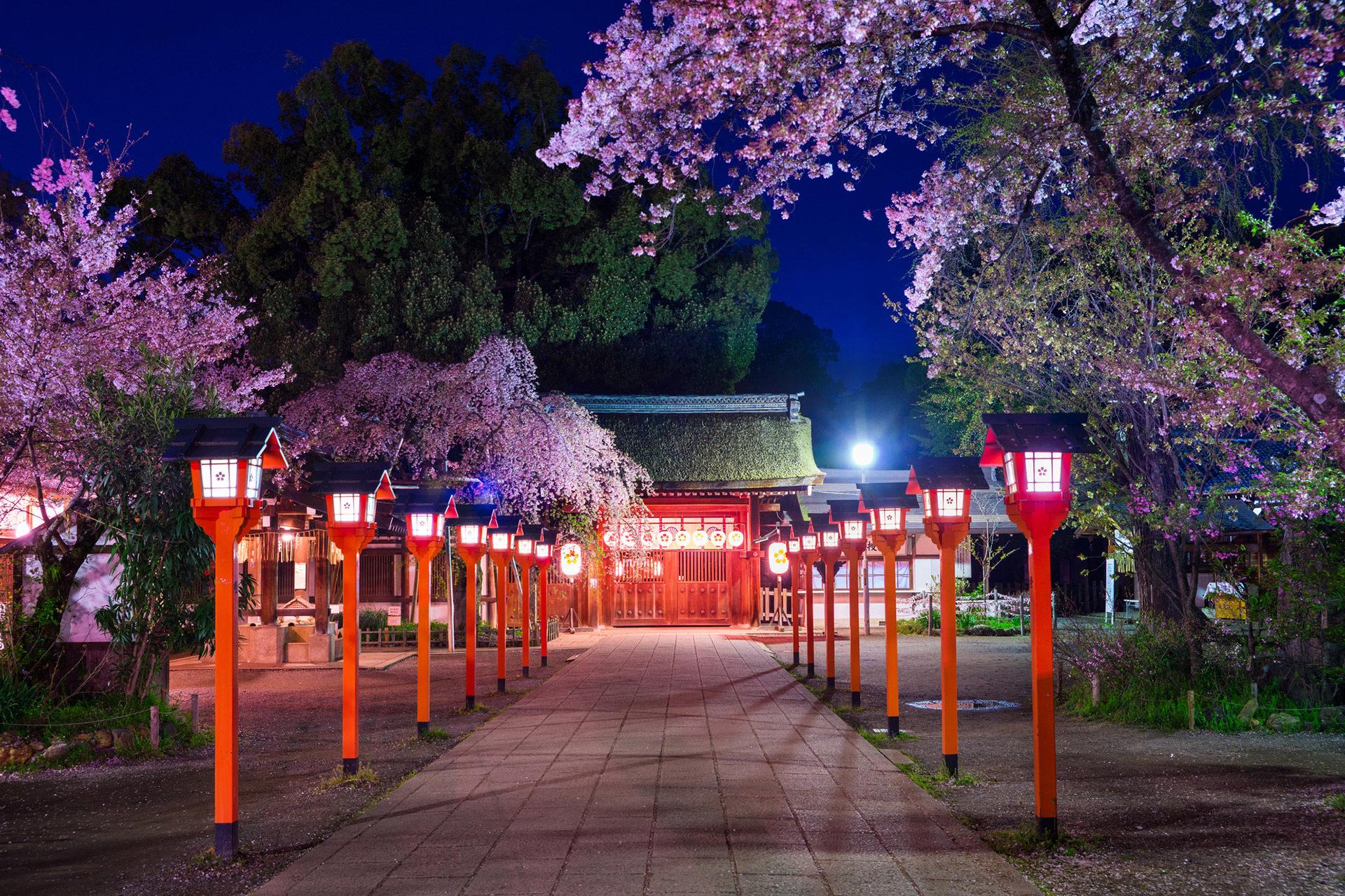 京都-平野神社-桜-ライトアップ