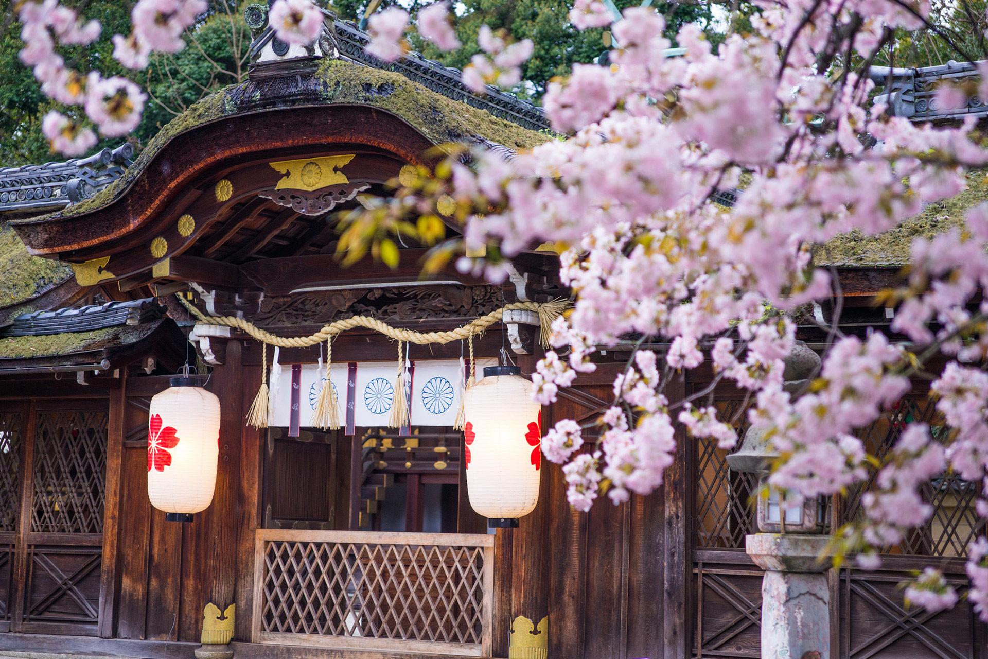 京都-平野神社-桜-風景