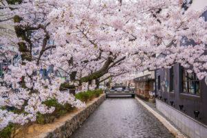 京都-木屋町-桜