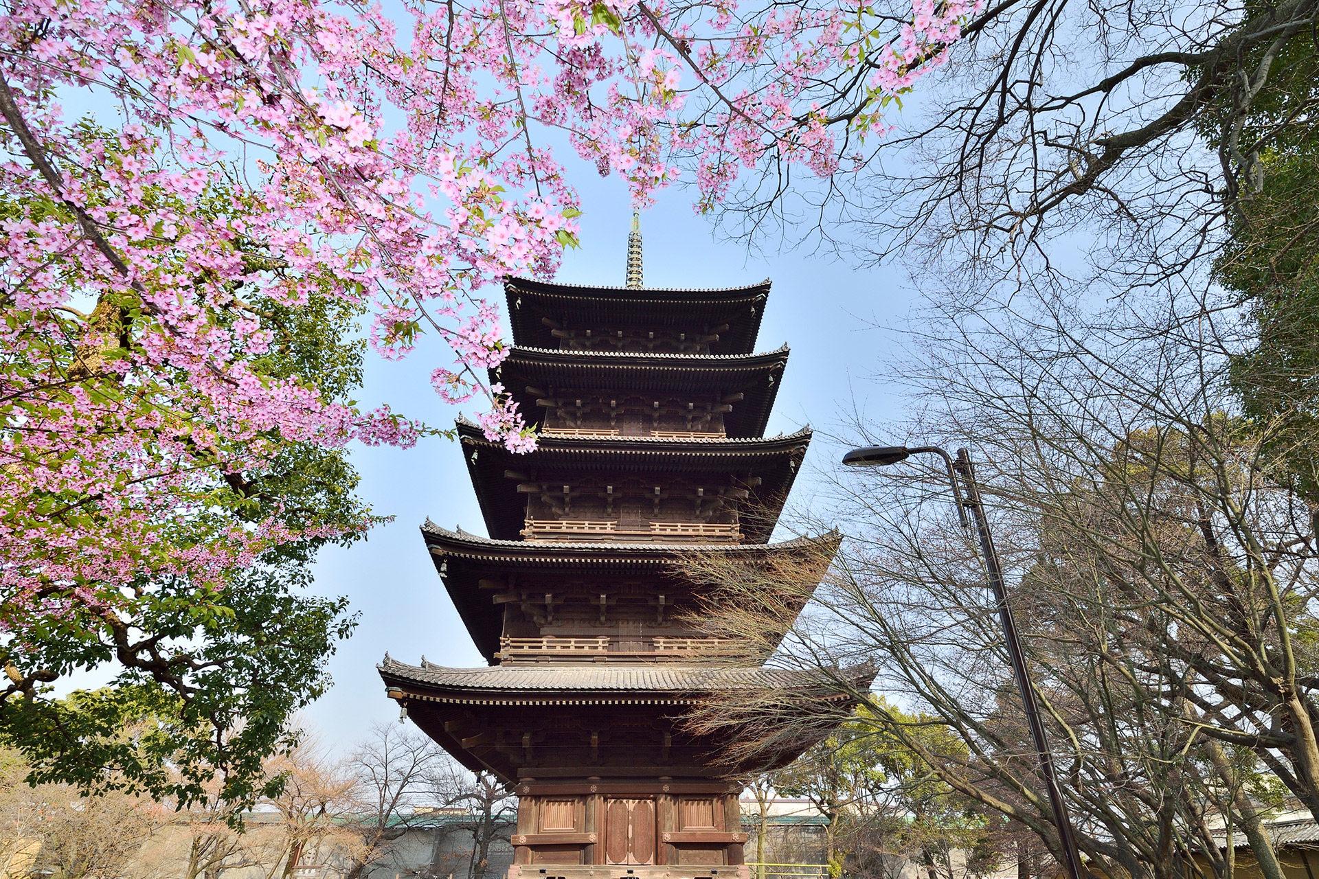 京都-東寺-五重塔