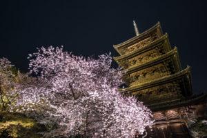京都-東寺-桜