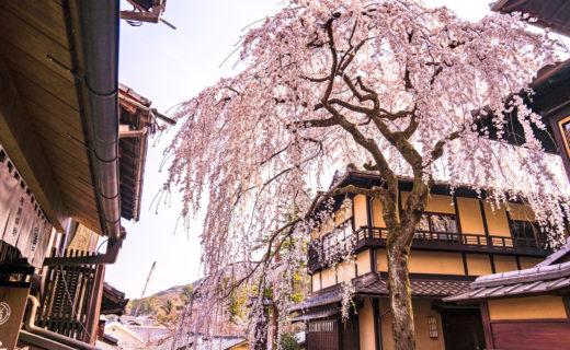 京都-桜-スポット