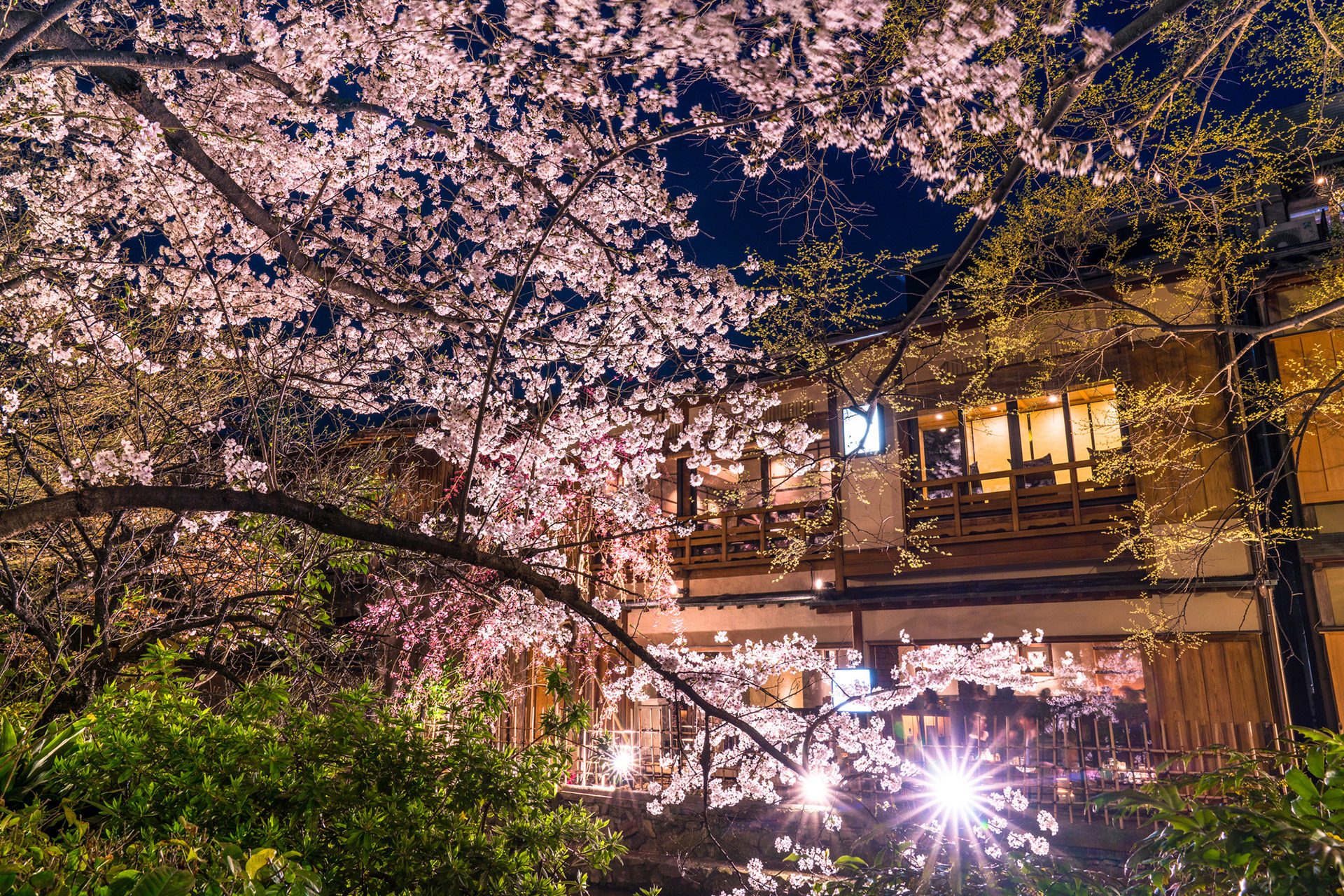 京都-桜-ライトアップ-イメージ