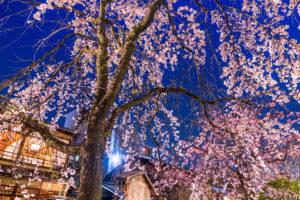 京都-桜-ライトアップ