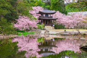 京都-桜-名所-イメージ