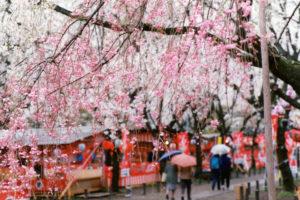 京都-桜-屋台-風景