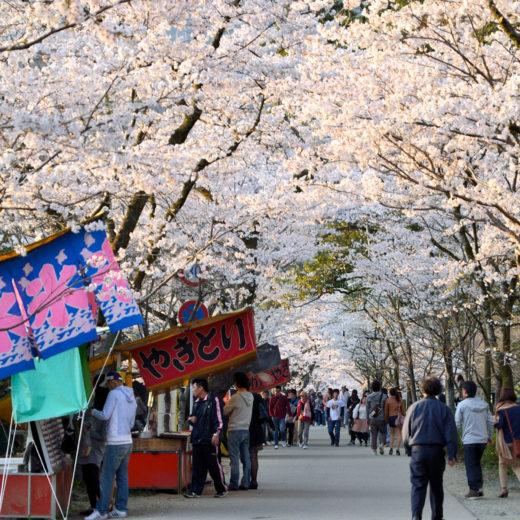 京都-桜-屋台