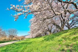 京都-桜-絶景