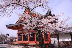 京都-清水寺-シダレサクラ