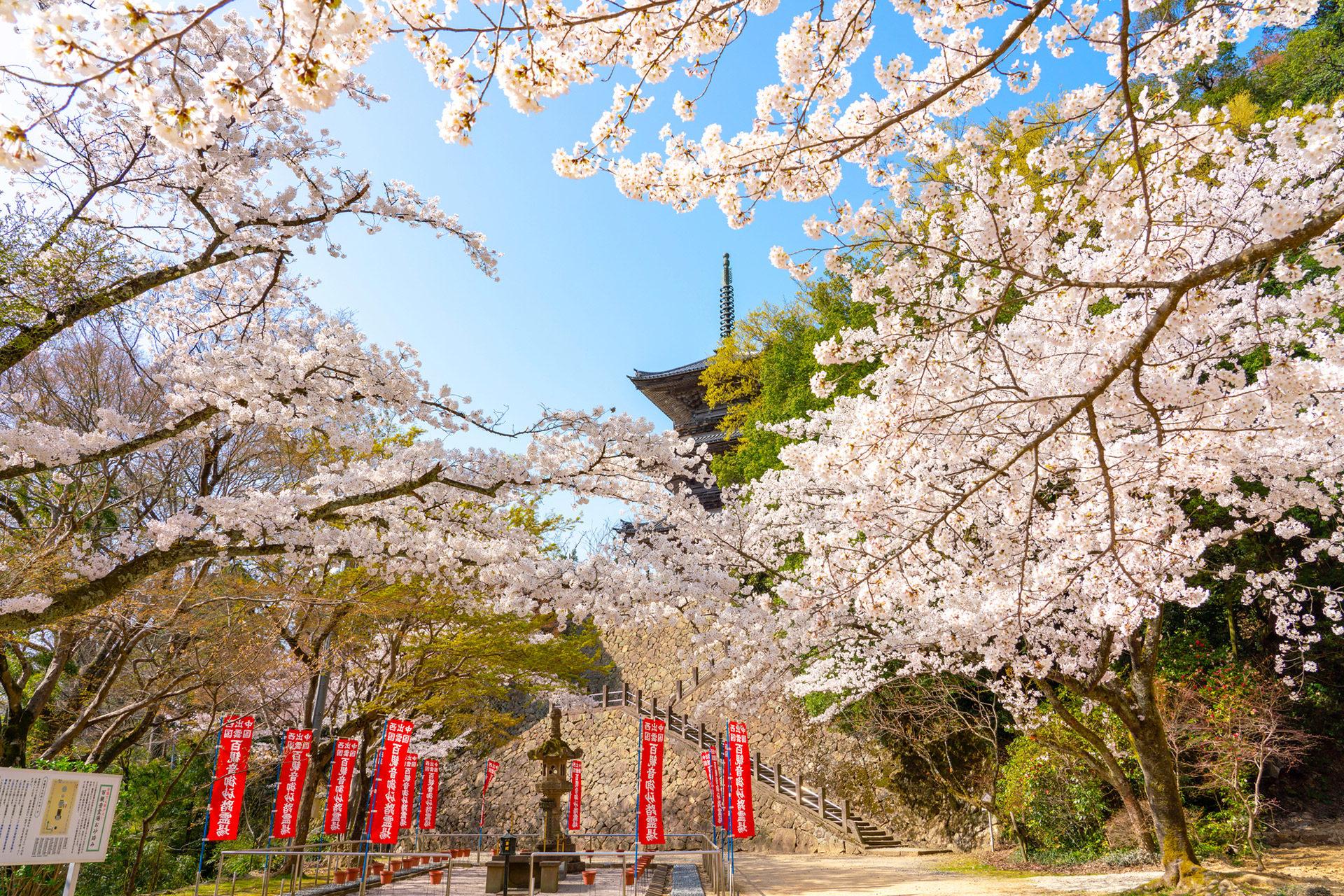京都-清水寺-ソメイヨシノ