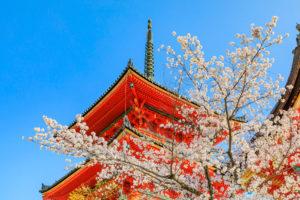 京都-清水寺-三重塔-桜
