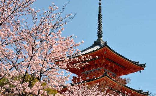 京都-清水寺-桜