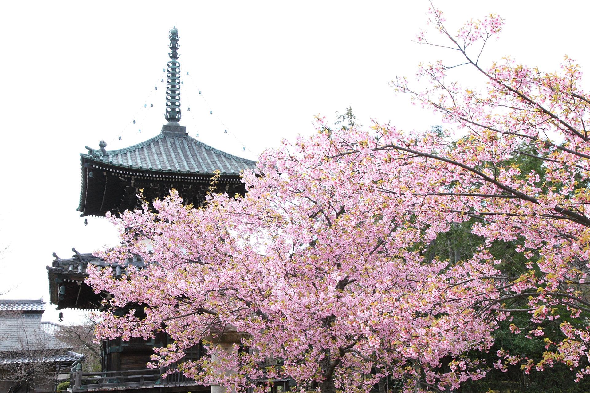 京都-清涼寺
