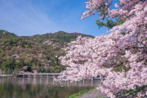 京都-渡月橋-桜