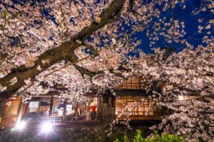 京都-祇園白川-ライトアップ