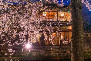 京都-祇園白川-桜-ライトアップ