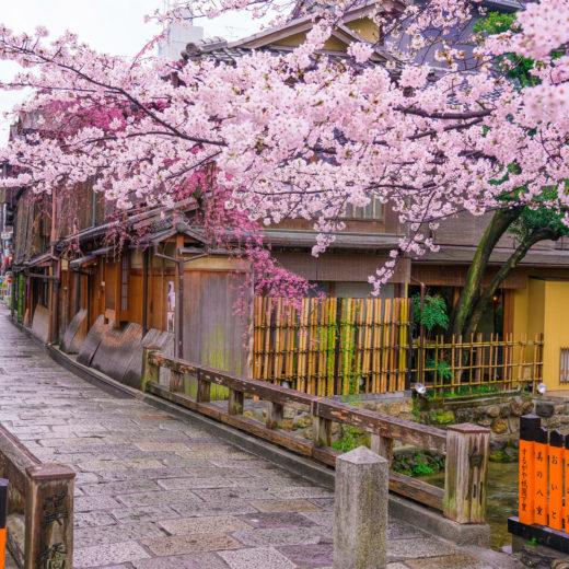 京都-祇園白川-桜-街