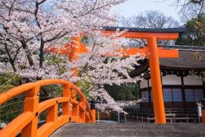 京都-神社-桜-イメージ