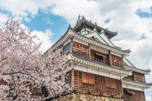 京都-福知山城-桜