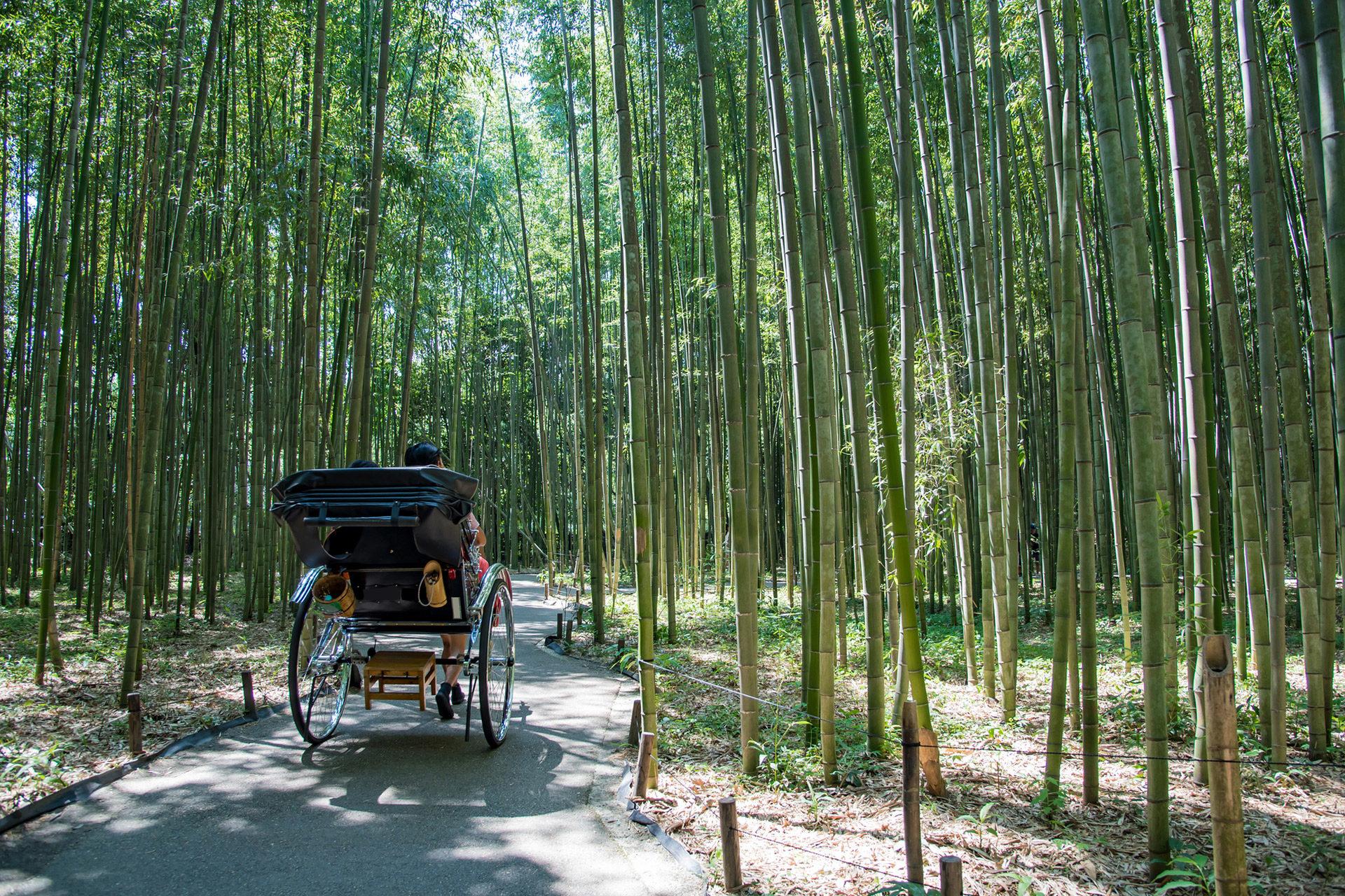 京都-竹林