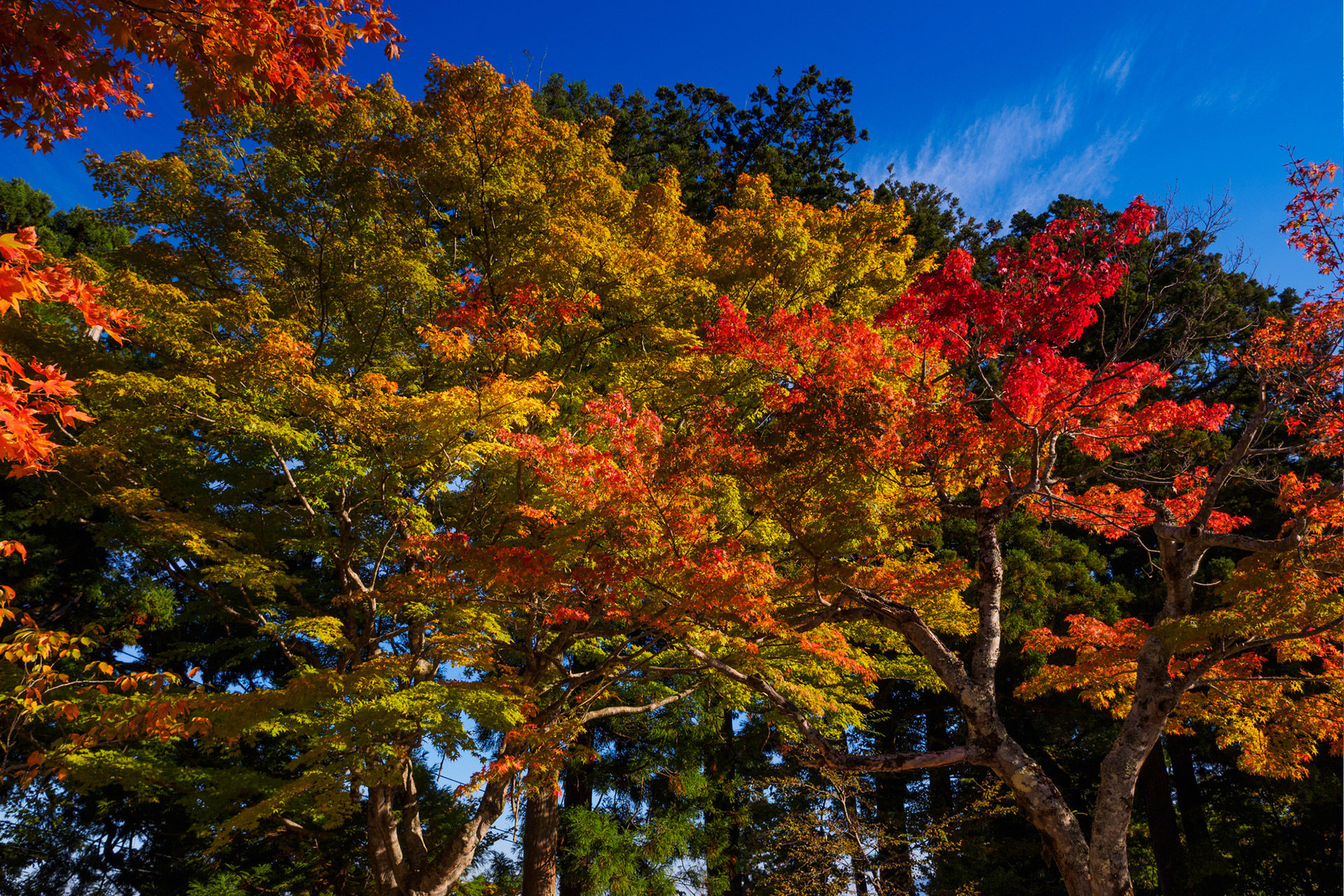 京都-紅葉-秋