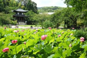京都-観修寺-夏