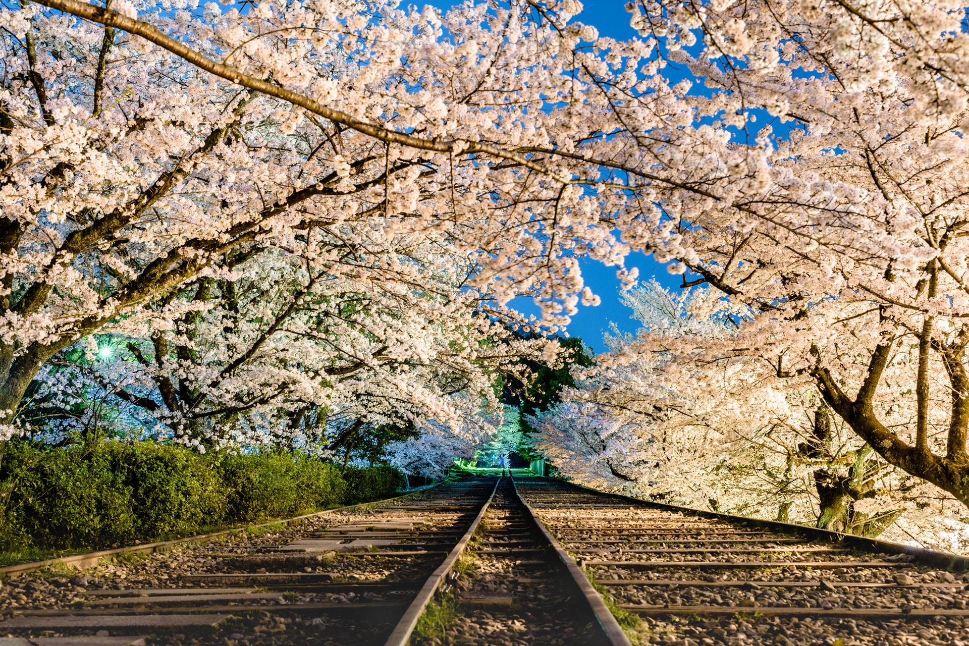 京都-蹴上インクライン-桜-ライトアップ